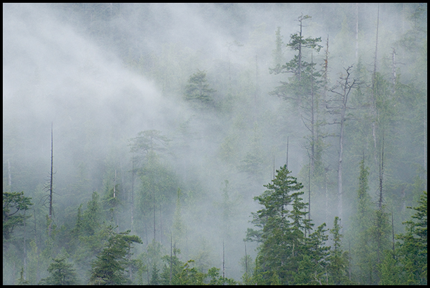 Misty Clouds, Nootka Island, B.C.