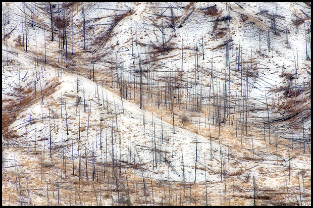 Burnt Hillside in Winter, Jasper