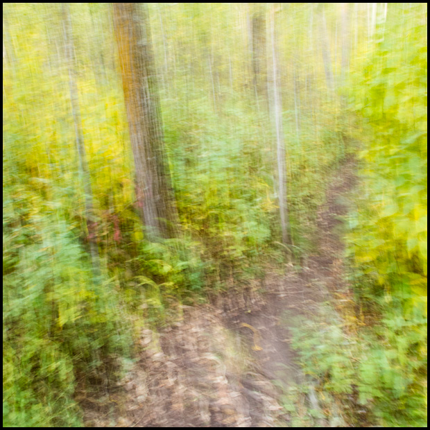 Through the forest - Canon Powershot G11 - ©Leslie Degner