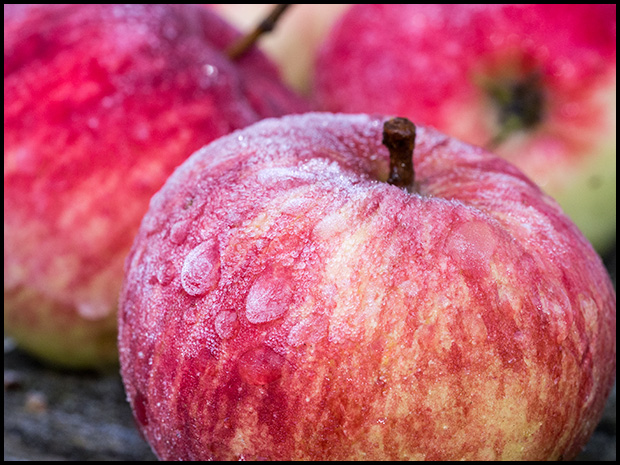 Frost on the Apples - Olympus E-m5, Olympus M.60mm f/2.8 macro ©Leslie Degner