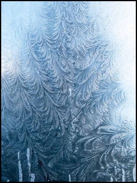 Frost patterns like branches on an evergreen, Canon Powershot G11 ©Leslie Degner