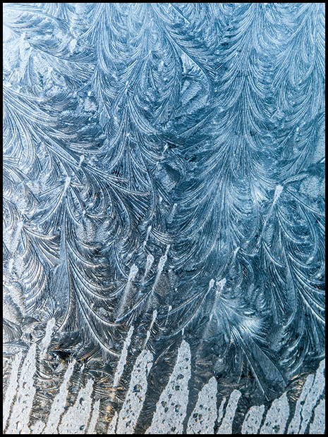 Frost patterns-2, Canon Powershot G11, ©Leslie Degner
