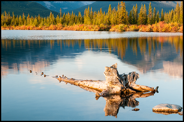 Driftwood at Vermilion Lakes, Banff National Park, Alberta warm light