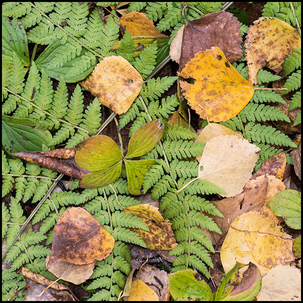 Leaves and Fern