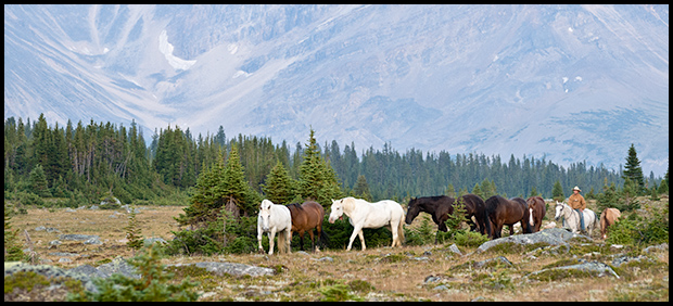 Rider moves horses through the valley, Tonquin Valley, Nikon D300, Nikon 70-300mm f/4.5-5.6, ©Leslie Degner