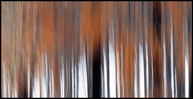 Burnt pine forest in Winter, Dreamscape, Canon G11, ©Leslie Degner