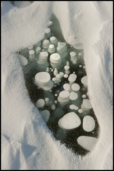 Frozen gas bubbles beneath surface of frozen lake