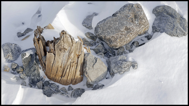 Rock Wood Snow, ©Alan Ernst
